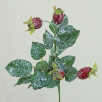 Christmas Foliage and Berries