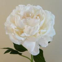 Cream Artificial Flowers